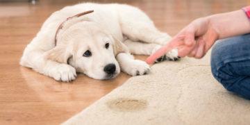 Usuwanie nieprzyjemnych zapachów po zwierzętach